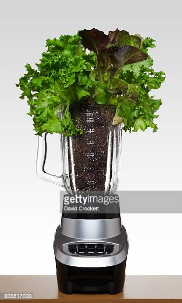 Lettuce and dirt in a blender