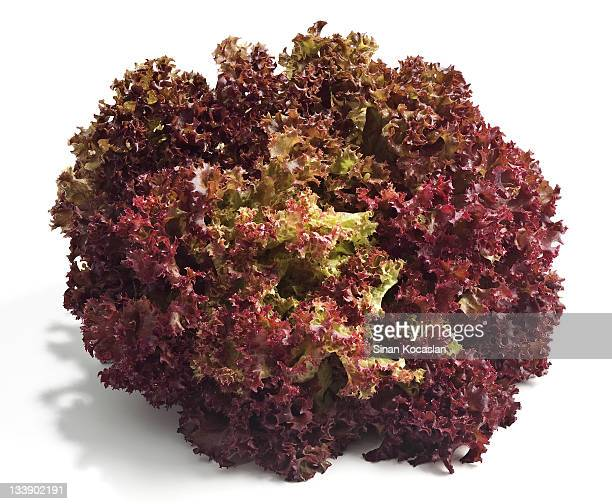 Red Leaf Lettuce Stock Pictures Royalty Free Photos Images