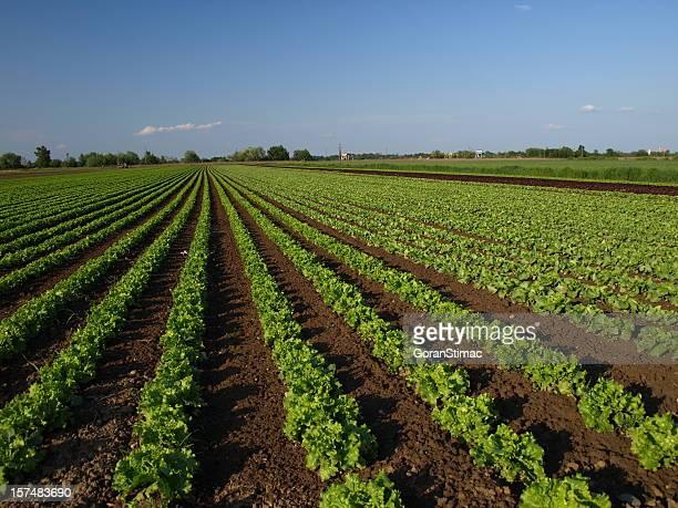 De salade farm