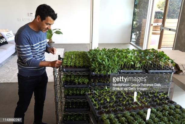 Lettuce Grow founder Jacob Pechenik picks a leaf from a seedling to taste at his office in Playa Vista on Thursday Apr 18 2019 He has created a...