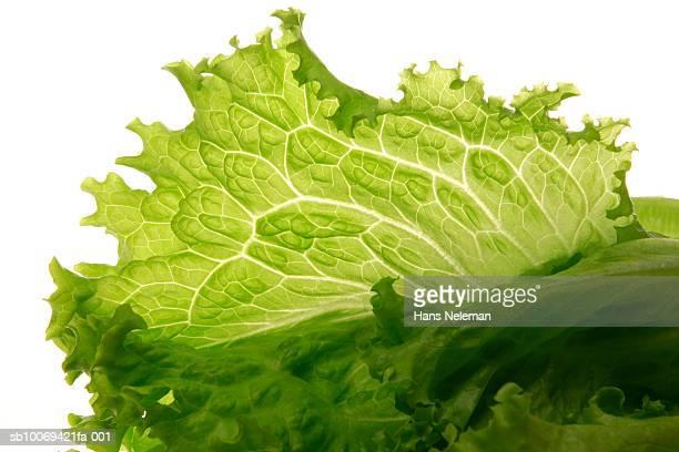 Lettuce leaf, studio shot