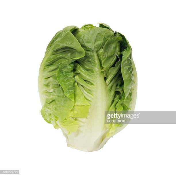 lettuce little gem - lettuce stock pictures, royalty-free photos & images