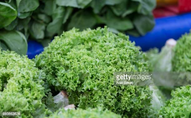 lettuce lollo at the market