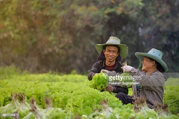Lettuce lover