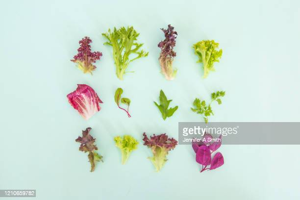 lettuce - arugula stock pictures, royalty-free photos & images