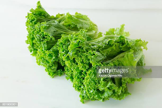 lettuce - leaf lettuce stock photos and pictures