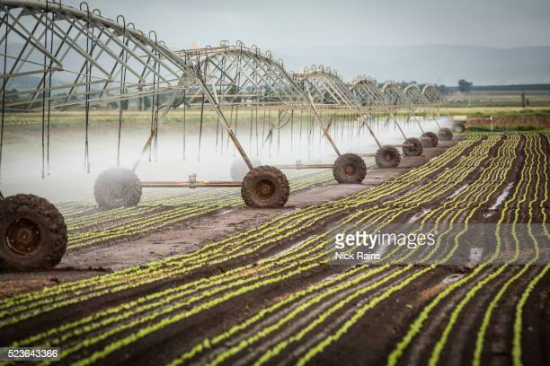 lettuce seedlings - irrigation equipment stock pictures, royalty-free photos & images