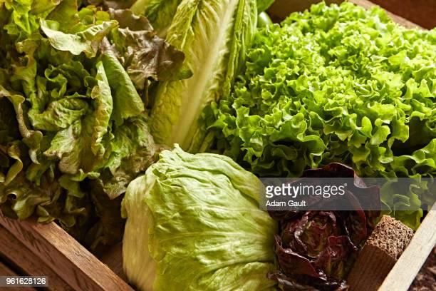 Lettuce Selection