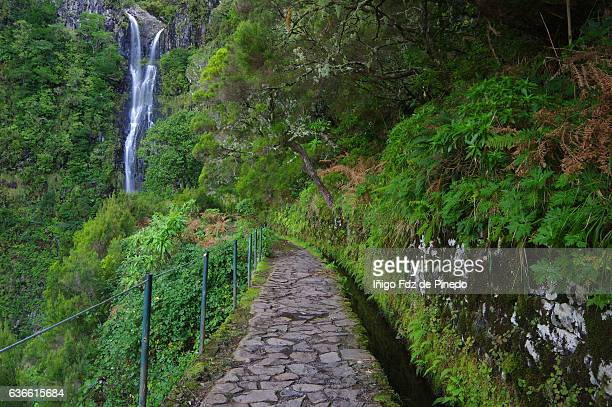 levada pathway-risco waterfall -madeira island- portugal - madeira island stock photos and pictures