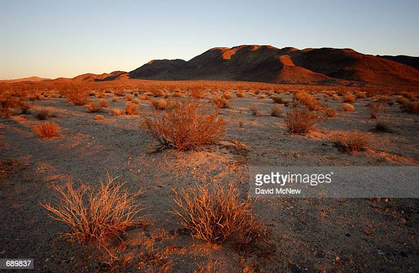Level land is ideal for both desert tortoises and tanks but not both January 4 southwest the US Armys Fort Irwin Military Reserve north of Barstow CA...