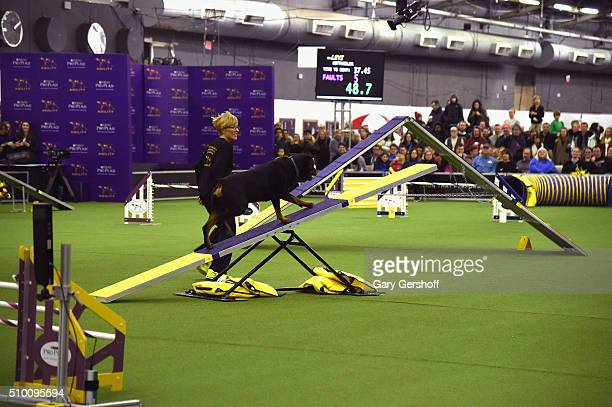 Levi a Rottweiler competes in the Westminster Kennel Club and AKC Meet and Compete at Pier 92 on February 13 2016 in New York City