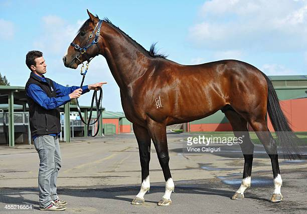Levi Kavanagh poses with 3yr old colt Chivalry during the Spring Racing Carnival Premiership launch at Flemington Racecourse on September 11 2014 in...