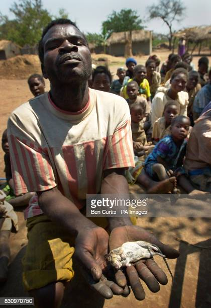 Levison Samalani displays a scarce mouse he has caught to eat in the faminestricken village of Kanyopola in central Malawi which would be boiled and...