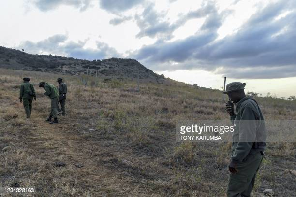 Lewa Wildlife Conservancy Rhino monitors track a female rhinoceros and her calf near Ngare-Ndare Forest, in Meru, on July 30, 2021. - Rangers play a...