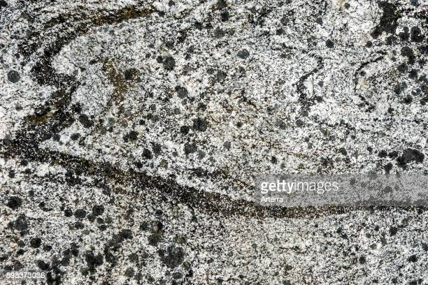 Lewisian complex / Lewisian gneiss close up of Precambrian metamorphic rock showing grain structure and texture