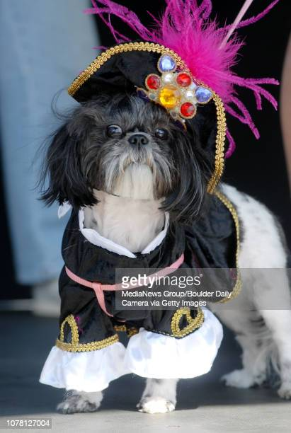 Lexi a ShihTzu was dressed as a pirate by owner Andy Smith for the Best Dressed dog contest at Broomfield Days on Saturday September 15 2007 Photo/...