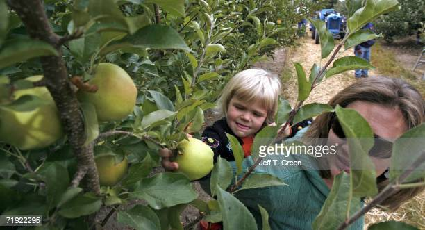 Lexi Pearson and her mother Andrea Pearson pick Honey Crisp apples at the Upick orchard on Walters' Fruit Ranch on September 18 2006 in Green Bluff...