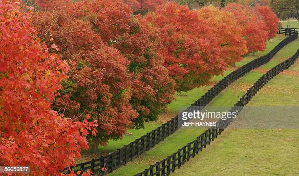 Lexington, UNITED STATES: A fence row along the pasture of the Pleasant Green Fame is shown 31 October 2005 outside of Lexington, Kentucky as the...