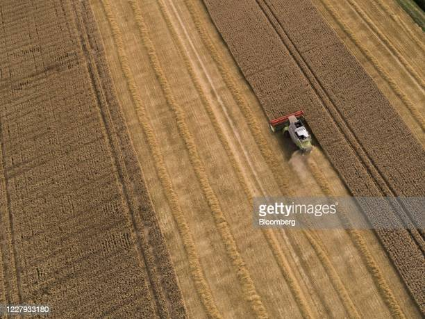 Lexion combine harvester, manufactured by Claas KGaA, drives through a field of wheat during the summer harvest in a field on the Morgue Estate in...