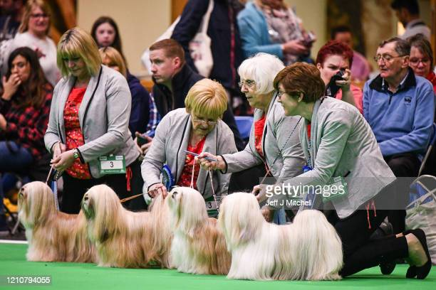 Lhasa Apso dogs are shown on day 2 of the Cruft's dog show at the NEC Arena on March 6, 2020 in Birmingham, England. The annual four-day show will...
