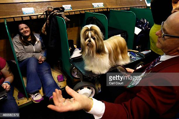 Lhasa Apso is groomed on the fourth and final day of Crufts dog show at the National Exhibition Centre on March 8 2015 in Birmingham England First...