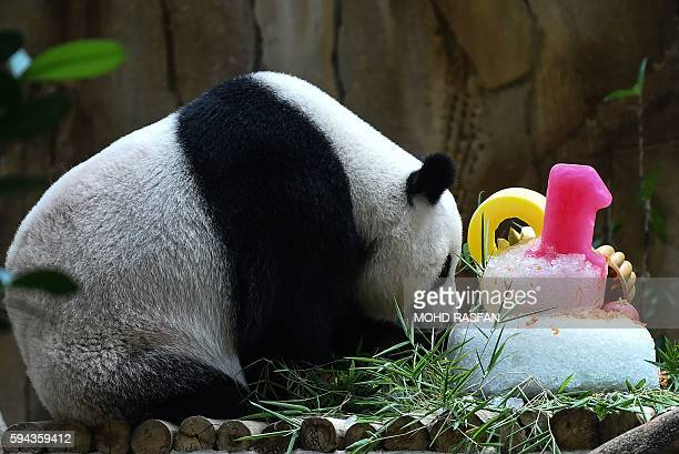 Liang Liang sniffs her 10th birthday cake during joint birthday celebrations for her and oneyear old cub Nuan Nuan at the National Zoo in Kuala...