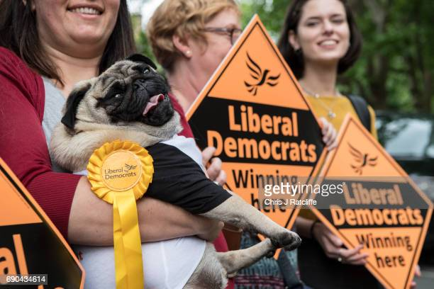 Liberal Democrats supporter holds 'Nelson' the Pug before Liberal Democrats Party politician Nick Clegg arrives to speak to the media and supporters...