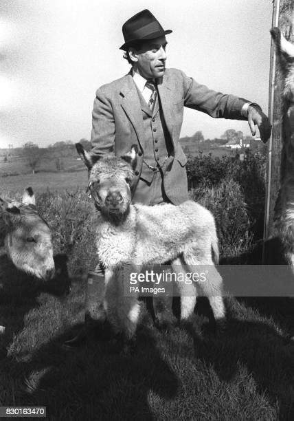 Liberal leader Mr Jeremy Thorpe pictured with Peta a 10weekold donkey during a visit to a friend's house near Barnstaple in his North Devon...