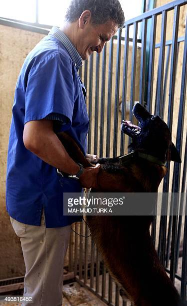 Libyan vet Jalal Kaal plays with a dog he rescued in Tripoli at his clinic in the Libyan capital on October 19 2015 When evacuated foreigners left...