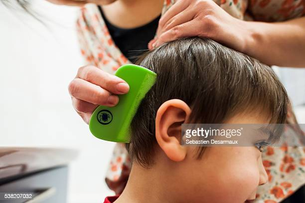 lice treatment. - louse stock pictures, royalty-free photos & images