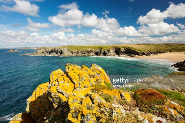 lichen covered rocks looking towards porth joke on pentire point, near newquay, cornwall, uk. - newquay stock pictures, royalty-free photos & images