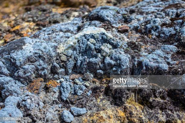 lichen on the stone near to the paramo in the protected natural area of belmira, antioquia - country geographic area stock pictures, royalty-free photos & images