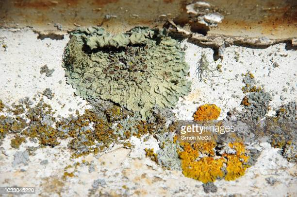 lichens grow on peeling paint of a metal guard rail next to a road - ugly wallpaper stock photos and pictures