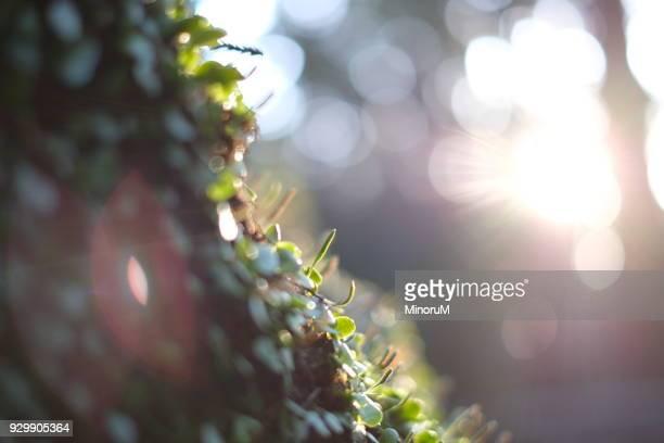 lichens growing on the rock - leuchtkraft stock-fotos und bilder