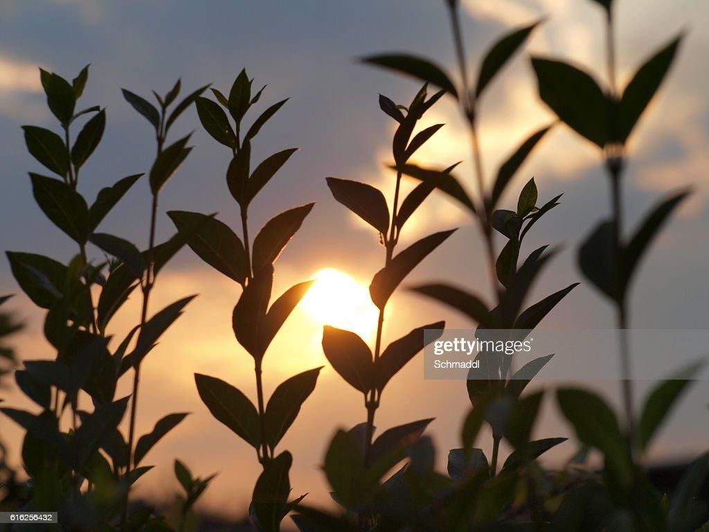 Lichtblick der Pflanzen : Stock Photo