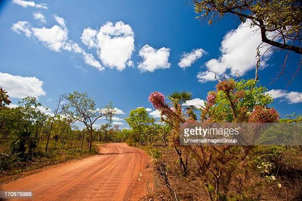 Lichtfield National Park Near Darwin Northern Territory NT Australia