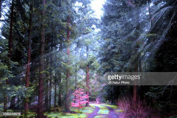 lichtstrahlen - natur stock pictures, royalty-free photos & images