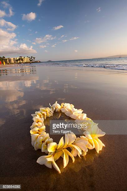 lie on kihei beach with reflections in sand - lei day hawaii stock pictures, royalty-free photos & images