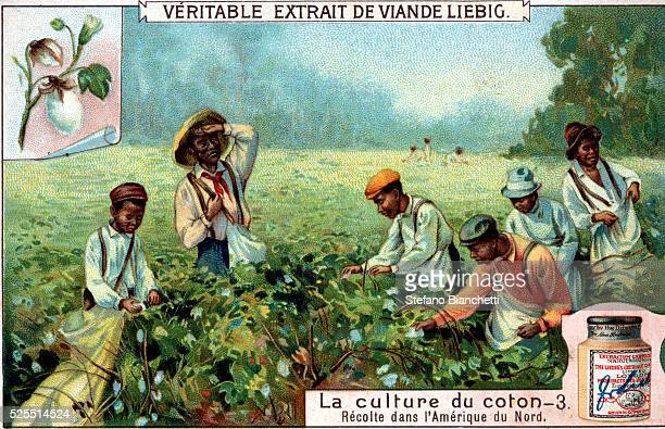 Liebig Extract of Meat Company Trade Card with Cotton Pickers