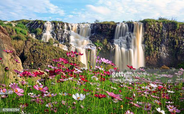 Lien Khuong Waterfall with cosmos in front