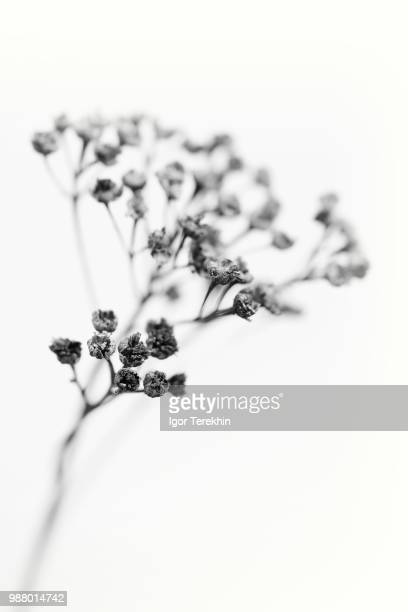 life after death ll - botany stock pictures, royalty-free photos & images