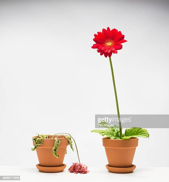 Life and death of a flower