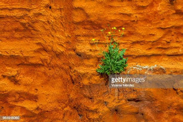 Life blooms on a wall with insulation
