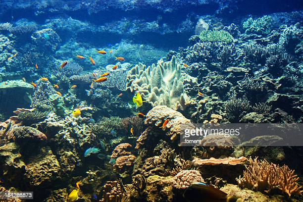 Life in coral reef