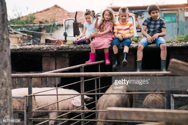 life in the animal farm - dirty little girls photos stock pictures, royalty-free photos & images