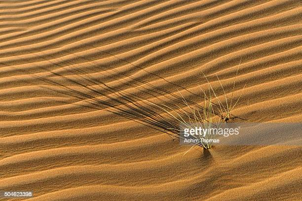 life in the desert - achim thomae stock-fotos und bilder