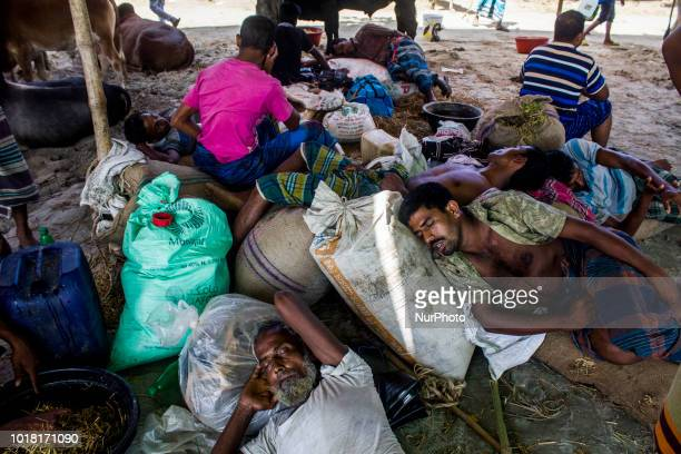 Life inside the cattle market in Dhaka Bangladesh on 17 August targeting Eidul Adha