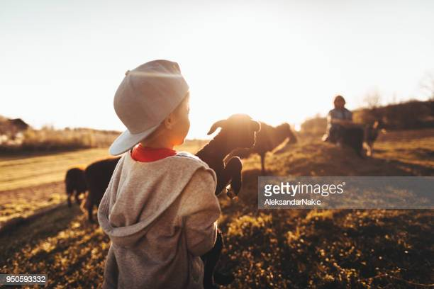 life on a farm - organic farm stock photos and pictures