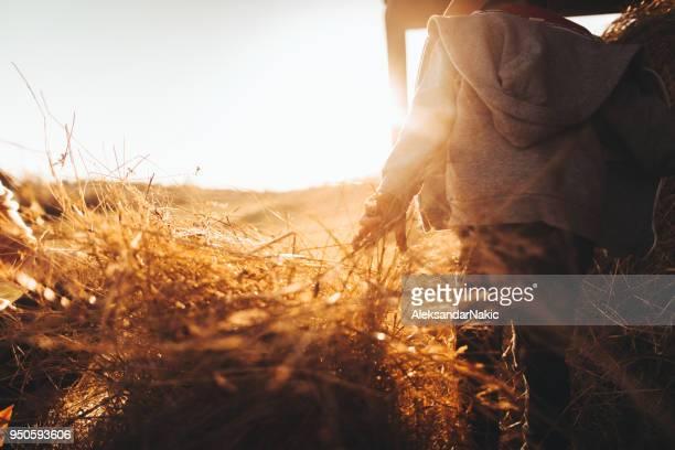 la vida en una granja - heno fotografías e imágenes de stock