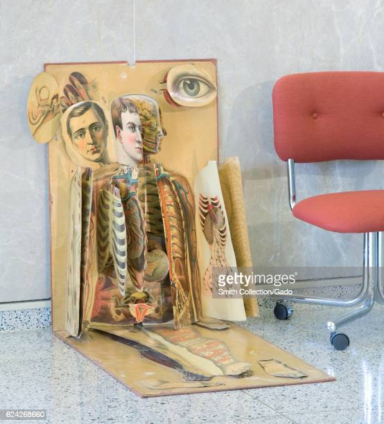 Life size chromolithographic anatomical chart consisting of basic image of superimposed multiple series of hinged flaps illustrating tissue groups...